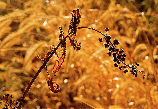 Bascule Farm, Poolesville, Maryland, Autumn 2001 by James Oppenheim