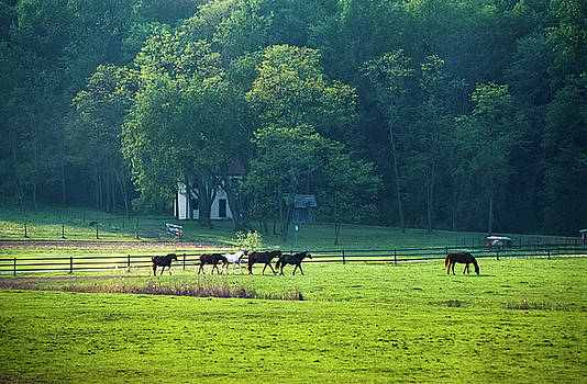 Bascule Farm, Poolesville, Maryland, Spring,, 2001 by James Oppenheim