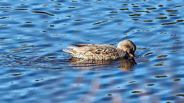 Bashful Duck by William Bosley