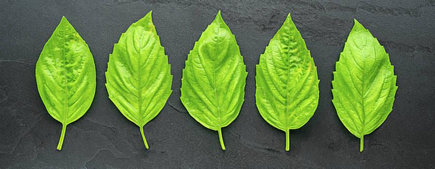 Basil Leaf Panorama by Steve Gadomski