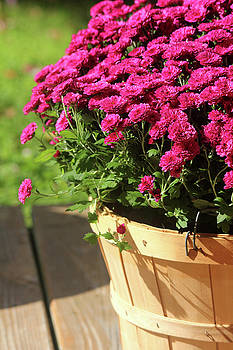 Basket of Blooms by Trina Ansel