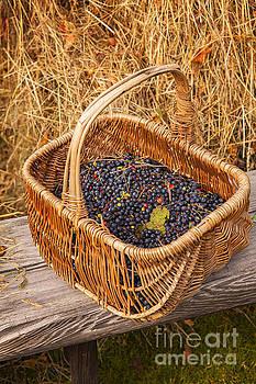 Sophie McAulay - Basket of blueberries