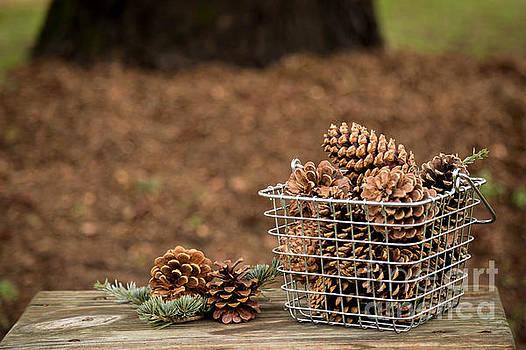 Basket of Cones by Kelly Ann Jones