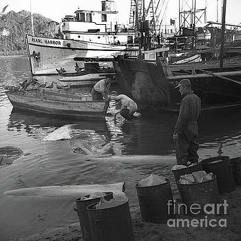 California Views Mr Pat Hathaway Archives - Basking shark fishery in Moss Landing March 1947