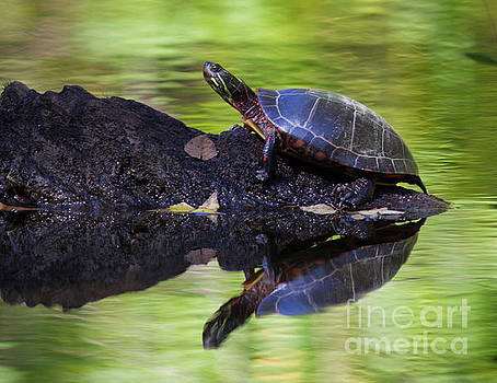 Basking Turtle by Douglas Stucky