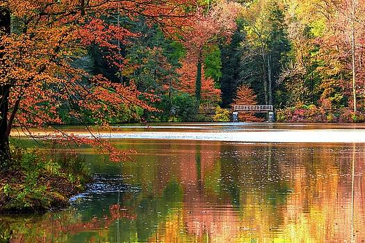 Pond In Autumn by Carol Montoya