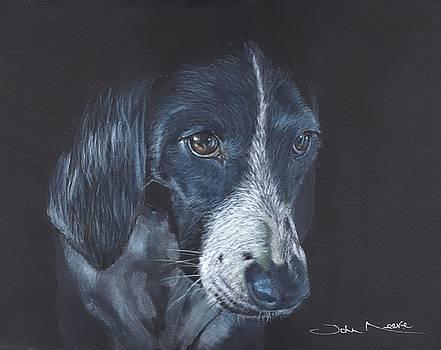 Basset Hound by John Neeve