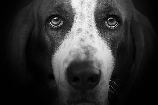 Basset Hound by Lori Hutchison