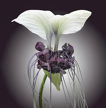 Bat Plant by Denise Bird