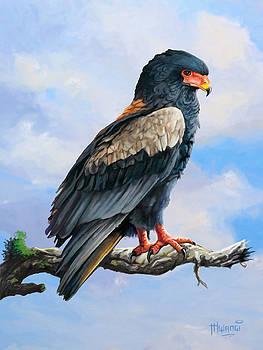 Bateleur Eagle by Anthony Mwangi
