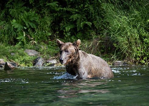 Gloria Anderson - Bathing bear