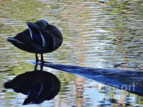 Beatrice Cox - Bathing Duck