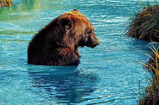 Bathtime Bear by Brian Stevens