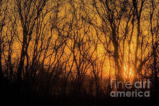 Cheryl McClure - Batik Sunset