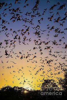 Michael Tidwell - Bats at Bracken Cave