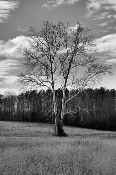 Battlefield Tree II by Troy  Skebo