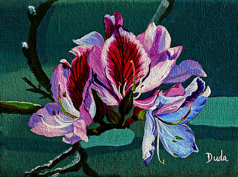 Bauhinia Beauty by Susan Duda