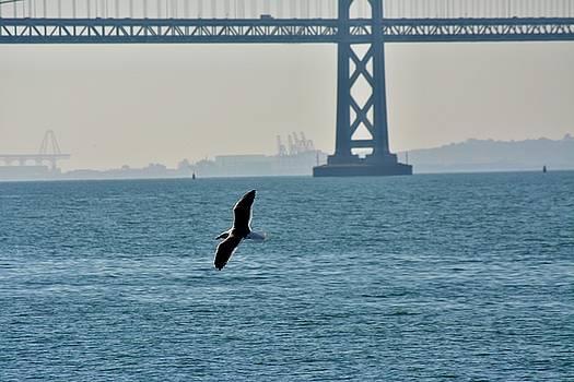 Bay Bridge Gull by Phil Bearce