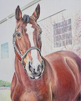 Bay Dressage Mare by Gail Dolphin