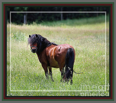 Sandra Huston - Bay Shetland Pony, Framed