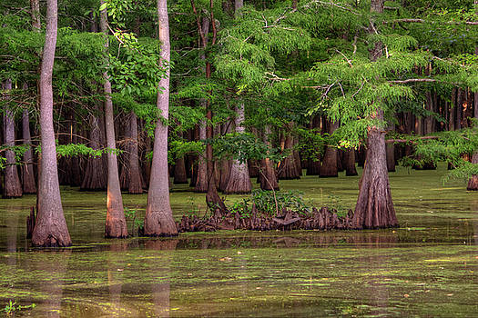 Bayou At Dusk by Ester Rogers