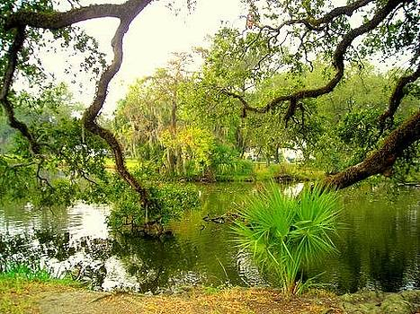 Bayou in New Orleans by Ted Hebbler