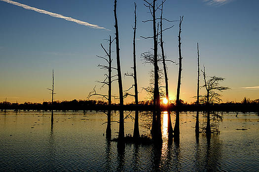 Bayou Sunset by Lance E King