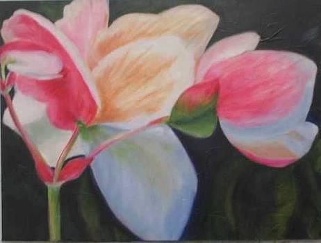 B.C. Begonia by Selma Cooper