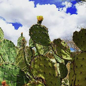 Be Like This #cactus... Prickly On The by Sarah Marie
