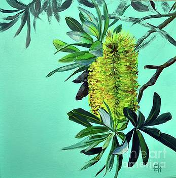 Beach Banksias by Chris Hobel