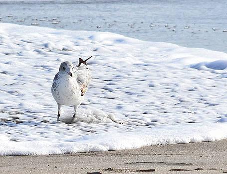 Beach Bather by Maria Keady