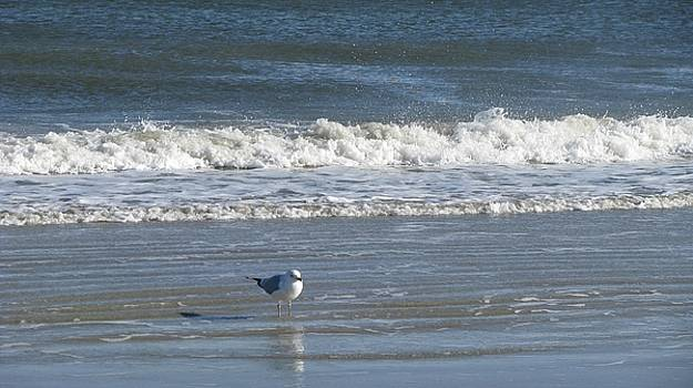 Beach Bird by Amy Fitzsimmons