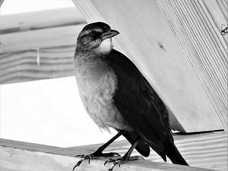 Beach Bird  by Mario Carta