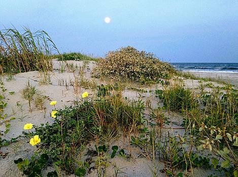 Beach Bouquet by Sherry Kuhlkin