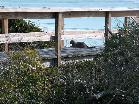 Racquel Morgan - Beach Cat