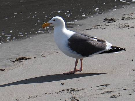 Beach Comber by Denise Lowery
