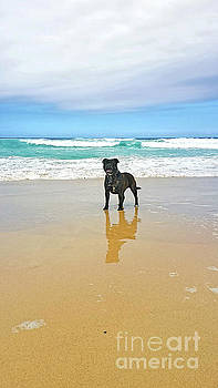 Beach Dog and Reflection by Kaye Menner by Kaye Menner