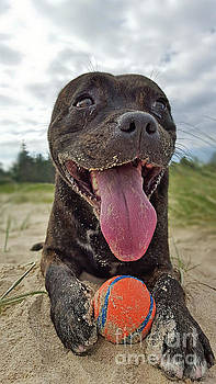 Beach Dog - More Play? by Kaye Menner by Kaye Menner