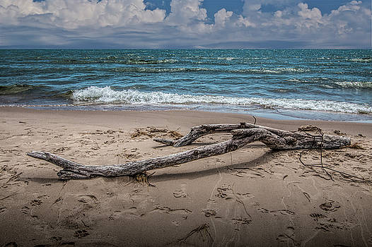 Randall Nyhof - Beach Driftwood on Lake Michigan