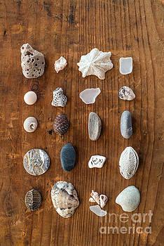 Beach finds  by Viktor Pravdica
