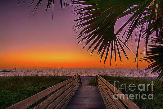 Beach Front View by Quinn Sedam