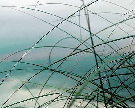 Beach Grass and Sea by Sharon Kalstek-Coty