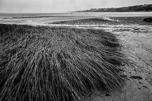 Beach Grass by Jim Gillen