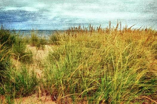 Beach Grass Path - Painterly by Michelle Calkins