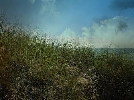 Beach Grass by Sue Midlock
