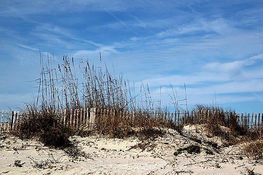 Beach Grasses on the Dunes by Rosanne Jordan