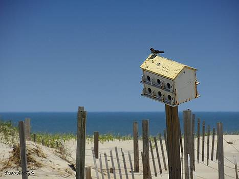 Beach House Of An Avian Variety by Matt Taylor