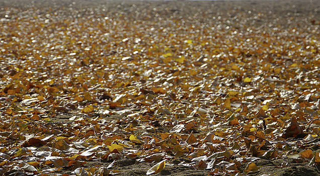 Beach of Autumn Leaves by Trance Blackman
