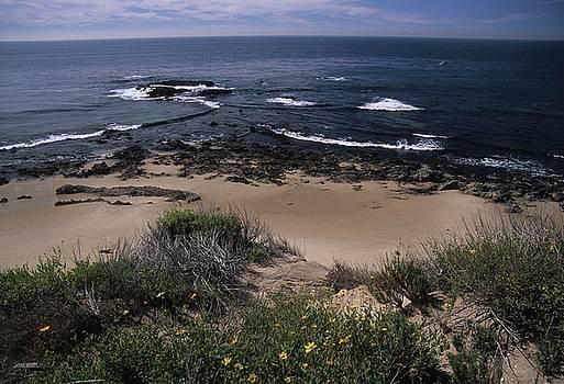 Don Kreuter - Beach Reef Point Wildflowers