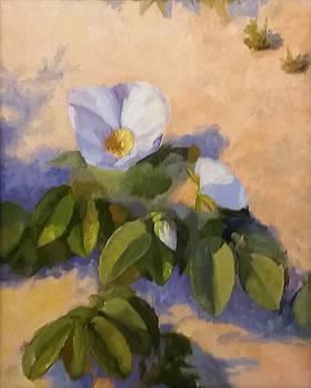 Beach Rose by Beth Johnston